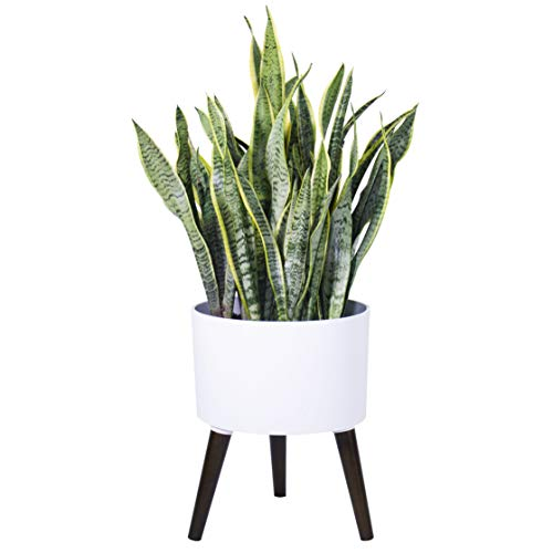 Indoor Modern Planter Pot with Stand - Matte White - with Drainage Hole and Plug, 12