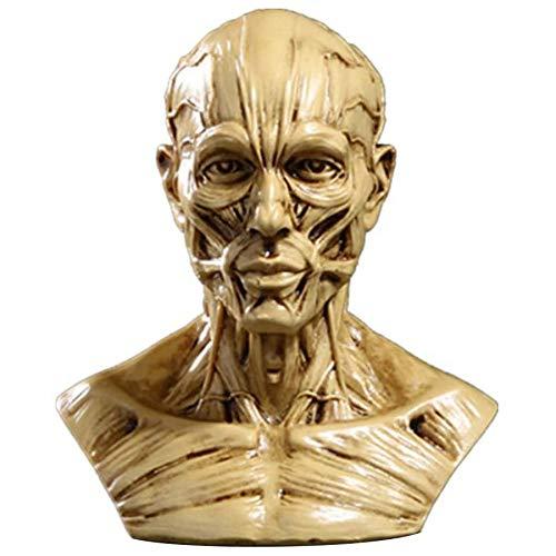 1:1 Human Head Muscle Tissue Anatomy Skull Head Muscle Bone Medical Art for The School