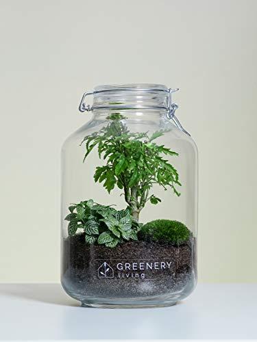 Flaschengarten Jar-4 DIY-Set/Terrarium/Biotop/Ökosystem (5 Liter): stilvolles Wohnaccessoire mit echten Pflanzen, ideal als Geschenk