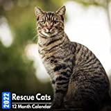 Calendar 2022 Rescue Cats: Cute Cats Photos Mini Calendar a Monthly Square Book Planner With Inspirational Quotes each Month