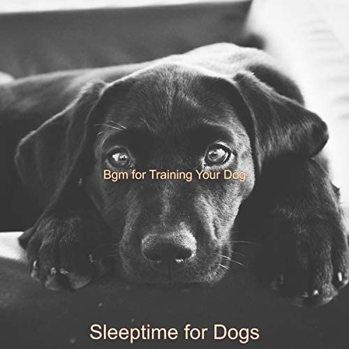 Sleeptime for Dogs