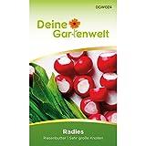Radieschen Riesenbutter Samen - Raphanus sativus - Radieschensamen - Gemüsesamen - Saatgut