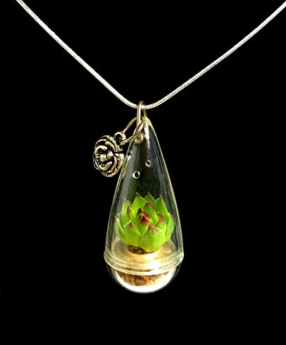 Live Lotus Succulent Necklace Wearable Miniature Succulent Necklace Live Terrarium Necklace (20 Inches)