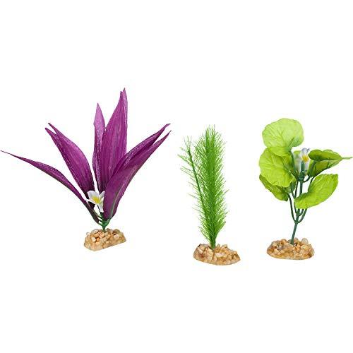 Best Foreground Plants For Aquarium