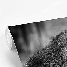 Fotobehang vinyl Leeuw in zwart wit - Mannelijke leeuw breedte 295 cm x hoogte 220 cm - Foto print op behang (in 7 formate...