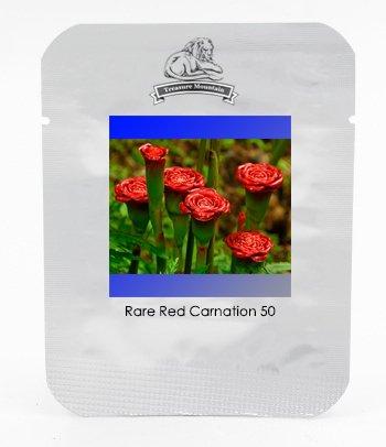 Rare Red Carnation Red Up Lampe Bulb 'Graines vivace Fleur, Paquet professionnel, 30 graines / Pack, Bonsai Fragrant Flower # NF898