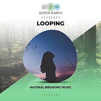 ! ! ! ! ! ! ! ! Looping Natural Birdsong Music ! ! ! ! ! ! ! !