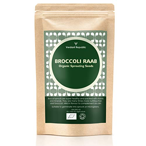 VERDANT REPUBLIC Organic Broccoli RAAB Sprouting Seeds 1kg | Healthy Superfood | Easy to Sprout in 4 Days | Non- GMO | High Germination into Microgreens in 10 Days