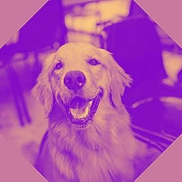 複雑な感情-歩く犬