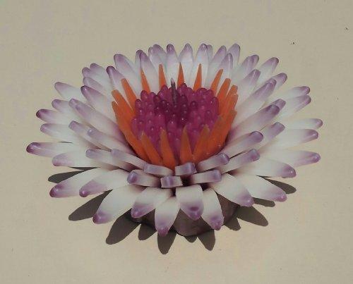 WASIWAX aroma a Daisy Queen vela flotante–L