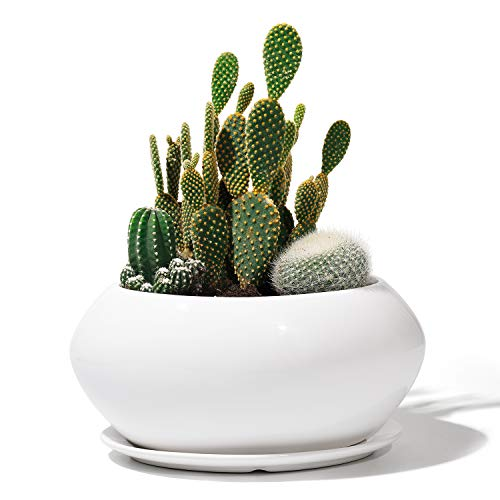 POTEY Ceramic Plant Flower Pots - 6.9 Inch Planter Bonsai Medium Container Large Space - Drain Hole with Saucer, Pure White