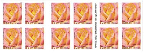 Peace Rose USPS Forever Stamp (2 Booklets (40 Stamps))  