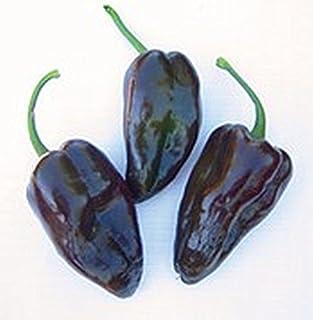 25 Seeds Mulato Isleno Peppers SO Tasty!!!