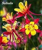 Importato columbine per piante aquilegia vulgaris rare pianta i bonsai fiore per la casa giardino di fiori in vaso 100 pz: 19 La confezione contiene 1 set Effettivamente spedire a tutti i consigli Tipo di prodotto: semi