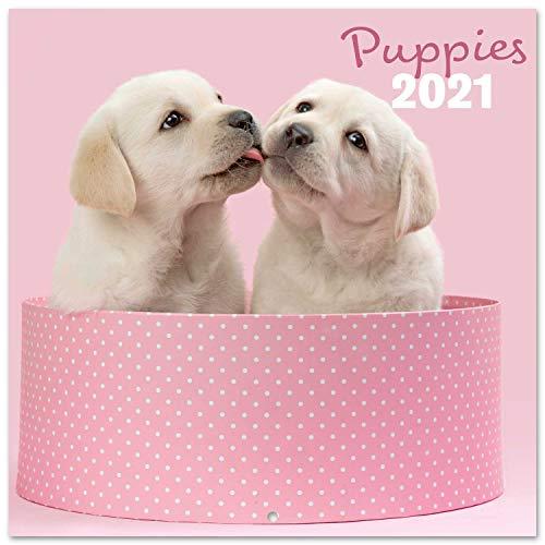 Grupo Erik CP21014 Calendario 2021 da Muro Chantrenne Dog, calendario cani 2021, 16 mesi,...