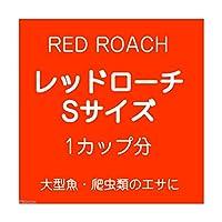 (生餌)レッドローチ Sサイズ 1カップ分 爬虫類 大型魚 餌 エサ 沖縄・離島不可 タイム便・航空便不可