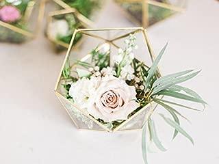 Bella's garden Geometric Terrarium Container Desktop Planter for Succulent Fern Moss Air Plants Holder Miniature Outdoor Fairy Garden Gift Wedding Ring Glass Box (Medium, Gold)