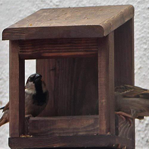 Mangiatoie per uccelli wengue