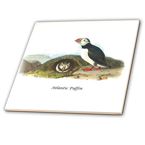 3dRose BLN John James Audubon Collection – Atlantic Puffin by John James Audubon – Piastrelle