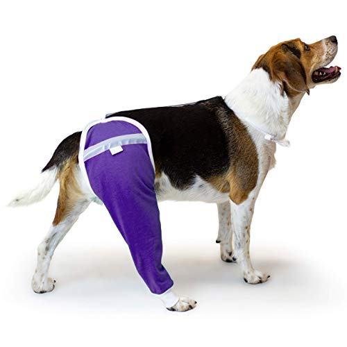 After Surgery Wear Hip and Thigh Wound Protective Sleeve for Dogs. Dog Recovery Sleeve. Recommended by Vets Worldwide (Large, Purple)