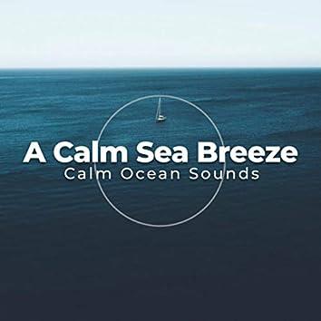 A Calm Sea Breeze