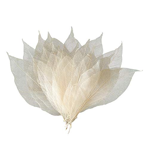 Hellery Rubber Tree Art Artificial Leaves Skeleton Leaves for DIY Wedding Invitation Autumn Parties Decoration Cardmaking - Primary magnolia