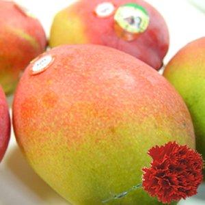 【 母の日ギフト】 メキシコ産 アップルマンゴー 2個 (1個:約350g) + カーネーション1本 【5月6日〜5月9日のいずれかの日お届け】