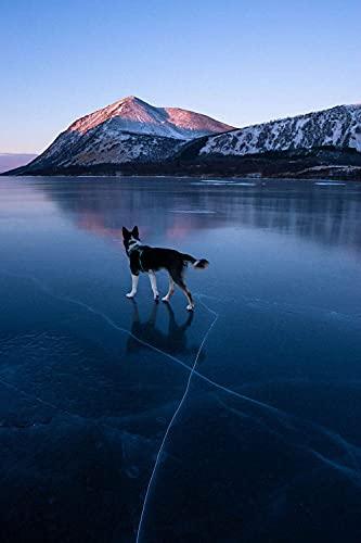 5D DIY diamante pintura bordado dibujo-perro husky en un lago congelado foto...