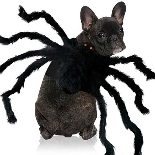 Spooky Spider Dog Halloween Costume