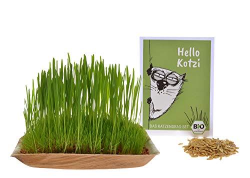 Hello Kotzi - Das Katzengras-Set: DIY Premium Bio-Katzengras zum selber anziehen. Mit 25g Saatgut, Anzuchtschale und Tongranulat. Kinderleicht fertig. Katzengras Schale
