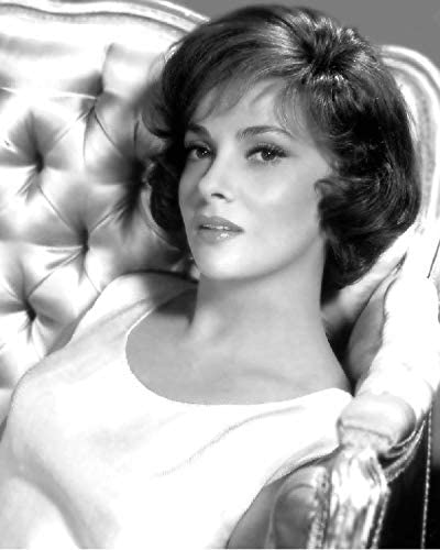 Gina Lollobrigda 8x10 Photo - No White Borders What Black Y Special Campaign or Ranking TOP8