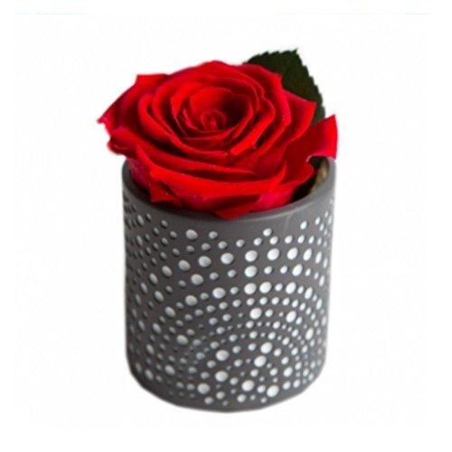 """Echte haltbare Rose rot Diamant konservierte Blume im Porzellanwindlicht Geschenk Set Celebration\""""The Rose of the Prince\"""""""