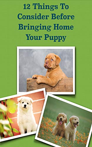 12 Things To Consider Before Bringing Home Your Puppy (Tutor Your Dog)