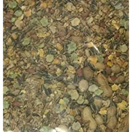 Maltbys' Stores 1904 Limited 10kg MOUSE AND RAT FOOD