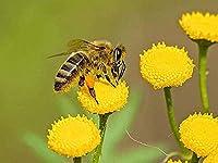 MHSHM 5Dダイヤモンド絵画モザイクDIY蜂が花に蜂蜜を集めるダイヤモンド刺繍ラインストーン装飾工芸品ホームギフトラウンドドリル40X50Cm(16X20Inch)