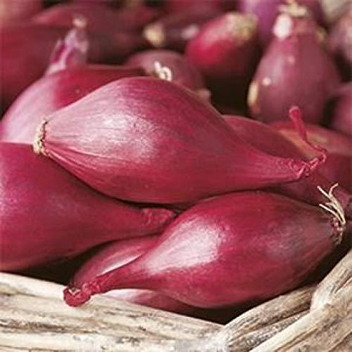 Semi Sementi Cipolla Tropea Lunga Rossa Onion Giardinaggio