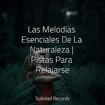 Las Melodías Esenciales De La Naturaleza   Pistas Para Relajarse