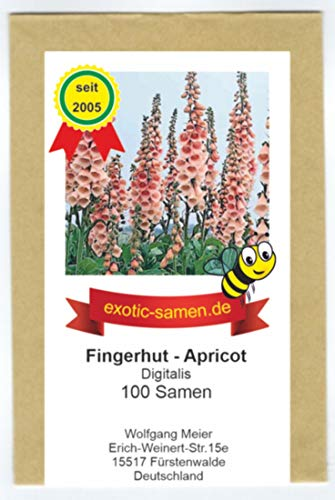 Digitalis - Fingerhut - Bienenweide - Apricot - 100 Samen