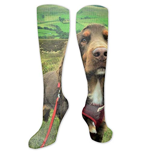 Spaniel Dog Muzzle Compression Socks, BEST for Men & Women, Running, Flight, Travels,parties