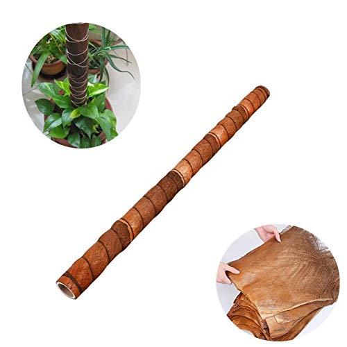 Epibremnum kokosvezel, dode plantenondersteuning, dode van kokosvezel, voor het verlengen van planten, kamerplanten voor het groeien van rankjes en epirerem. 24 pulgadas