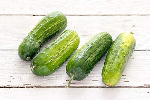 Boston Pickling Cucumber Seeds