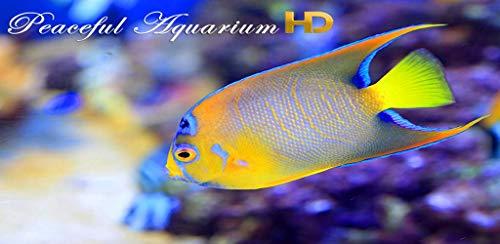 『Peaceful Aquarium HD』の12枚目の画像