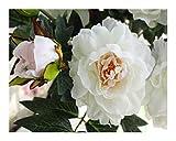 AIHONG Boda Ramo de Novia Flores Artificiales Falso Peony florece el Ramo Nupcial Boda Glorioso Decoración para decoración de Bodas (Color : White)