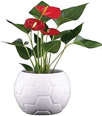 UGAOO Football Ceramic Pot (White, 5.1 Inch Diameter)