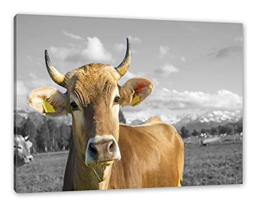 Pixxprint Neugierige Kuh auf Weide im Allgäu B&W Detail als Leinwandbild/Größe: 80x60 cm/Wandbild/Kunstdruck/fertig bespannt