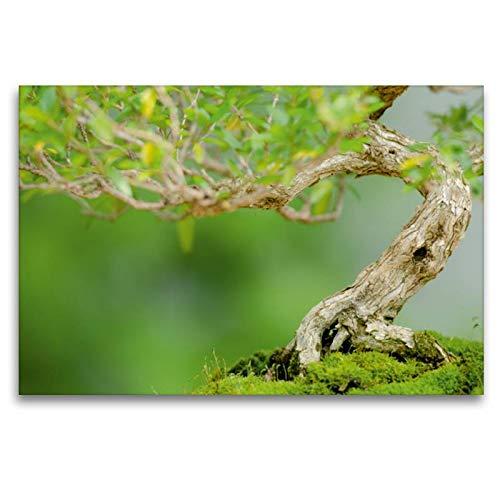CALVENDO Bonsai Baum Junischnee (Serissa foetida)
