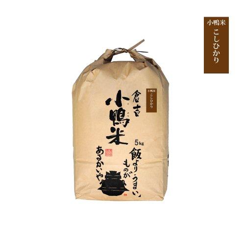 コシヒカリ 小鴨米 白米 鳥取県 倉吉市産 令和2年度産 新米 5kg