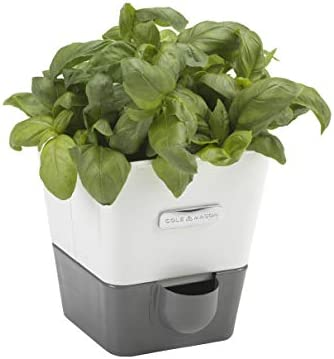 Cole Mason H105249 Fresh Herb Range Self Watering Potted Herb Keeper Enamel Coated Steel White product image