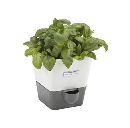 Cole & Mason CH105249 Conservateur de Herbe Fraîche en Pot avec Emplacement Blanc/Gris 13,5 x 12,5 x 12,5 cm