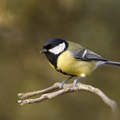 Birds In The Forest, Sounds of Nature Zone & Forest Sounds